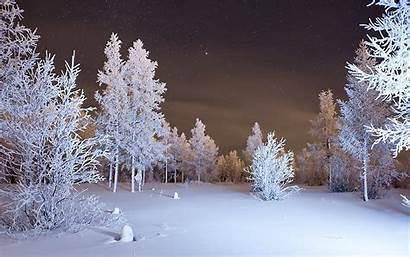 Winter Forest Wallpapers Snow Night Backgrounds Downloads