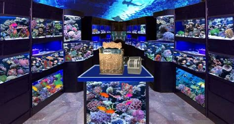 how to store fish stocking up on fish