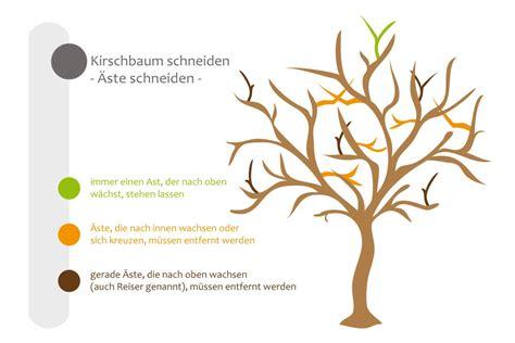kirschbaum radikal schneiden pr 228 ferenz kirschbaum radikal schneiden tz43