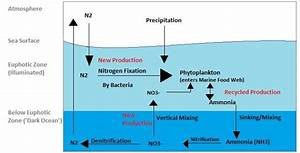 Nitrogen Cycle Facts For Kids