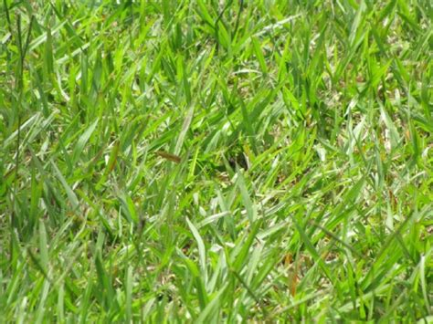 Tips To Prevent And Kill Bahia Grass