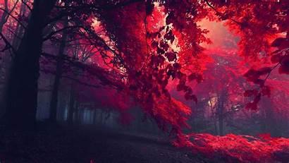 Wallpapers Forest 1080 1920 Trees Fullhdwpp Pixelstalk