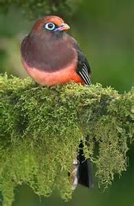Bird Trogon Arizona