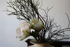 Amaryllis Zum Blühen Bringen : ikebana mit wei er amaryllis berlingarten ~ Lizthompson.info Haus und Dekorationen