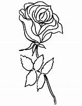 Coloring Rose Flower Roses Pages Printable Pretty Drawing Aster Flowers Getcoloringpages Clipartmag Popular Hearts sketch template