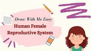How To Draw Female Reproductive System