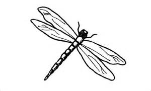 basic outlines of dragonflies 18 dragonfly templates crafts colouring pages free premium templates