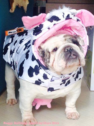 funny bulldogs costumes images  pinterest