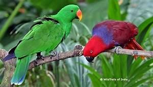 Top 10 Bird Sanctuaries of Kerala