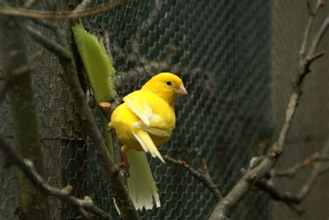 file yellow bird jpg