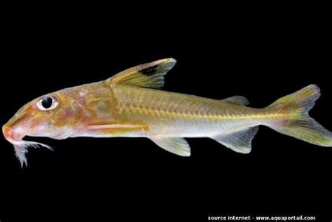 poisson tropicaux aquarium eau douce les poissons de la mer