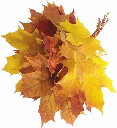 Leaves Autumn Leaf Transparent Pile Clipart Fall