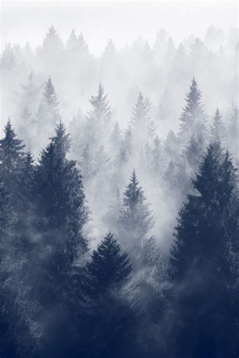 fog   forest pictures   images