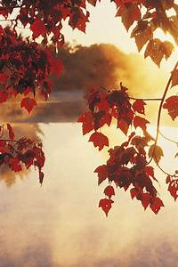 Autumn mist sunrise wallpaper | AllWallpaper.in #14844 ...
