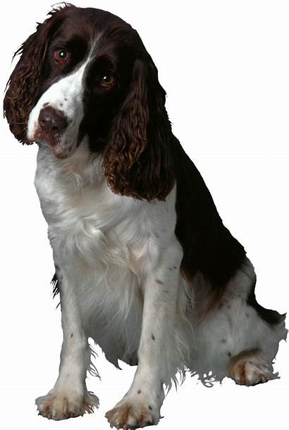 Dog Parvovirus Transparent Puppy