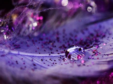 purple feather  abstract background wallpapers