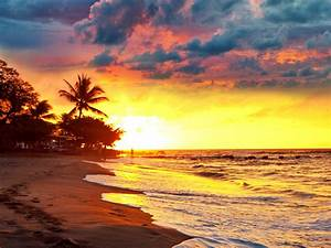 tropical paradise beach palms sea sunset beach sea palm ...