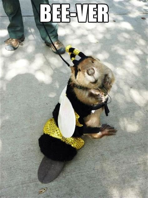 Bee Memes - 308 best images about funny animal memes humor on pinterest