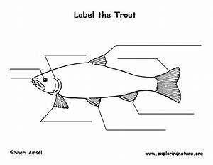 Trout Labeling