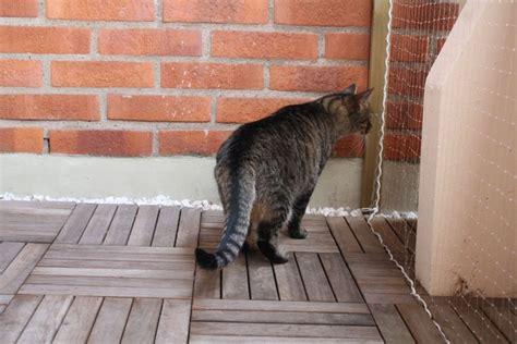 balkon sichern katze so sichert einen balkon f 252 r katzen tipps und