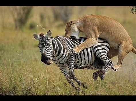 Animals Escaping Horrific Predicator Attacks Nature Can