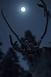 Reindeer in Moonlight