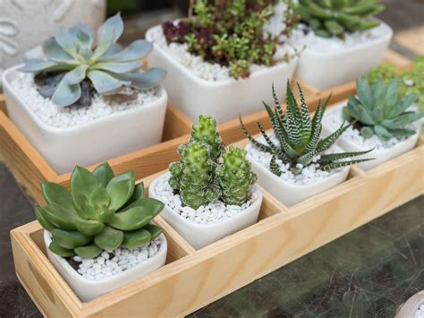 How to Avoid Killing Your Indoor Succulents   World of ...