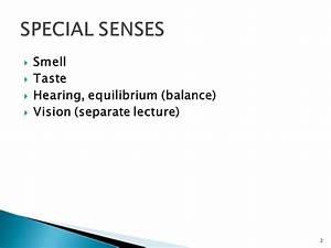 SPECIAL SENSES.