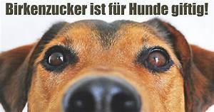 Schneckenkorn Giftig Für Hunde : birkenzucker ist f r hunde giftig mimikama ~ Lizthompson.info Haus und Dekorationen