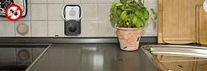 Ameisen In Der Wand : ameisen feind gardigo ~ Frokenaadalensverden.com Haus und Dekorationen