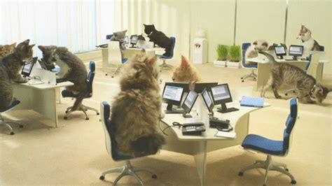 Office Space Answering Phone by Cat Call Center Office Cat Answering Phones Gif Wifflegif