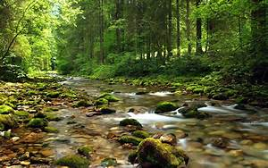 Mountain, Stream, River, Gravel, Covered, With, Green, Moss, Clear