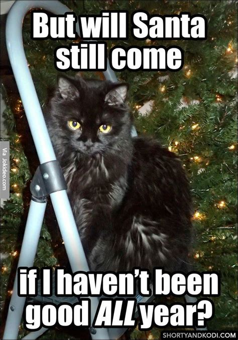 Christmas Cat Meme - will santa still come cat christmas meme http www jokideo com funny pinterest