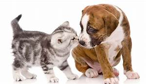 Selfish Cat & Loyal Dog Funniest Wallpapers HD ...