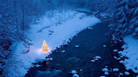 winter christmas tree wallpaper high definition high quality widescreen