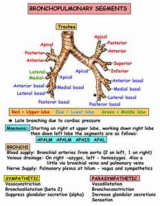 Instant Anatomy - Thorax - Areas  Organs