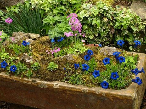 Entry By Graham Catlow Alpine Trough This Trough Contains
