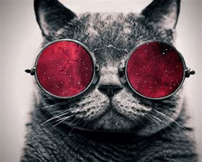 Cool Cat Cats Crazy Mmm Hipster Kitteh