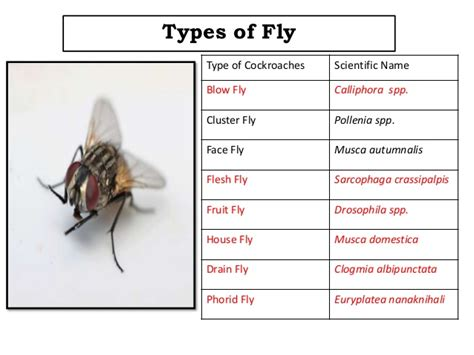 Types Of Flies And There Attributes