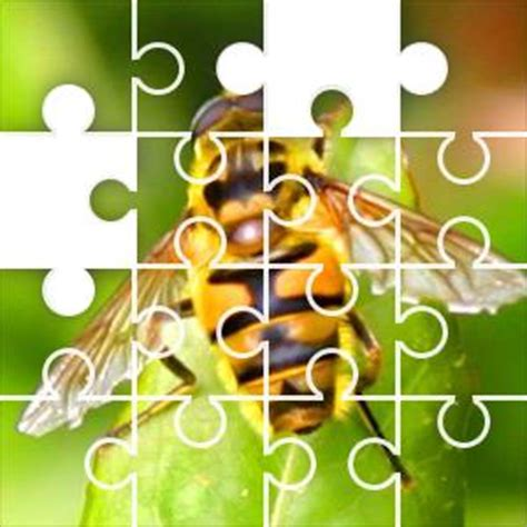 insect jigsaw puzzle jigzonecom