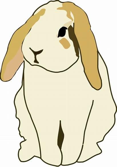 Clipart Rabbit Lop Eared Transparent