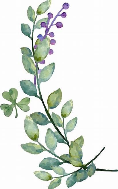 Leaves Watercolor Clipart Decoration Leaf Second Transparent
