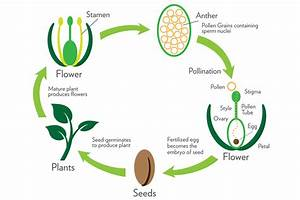 Part 3  Plant Reproduction
