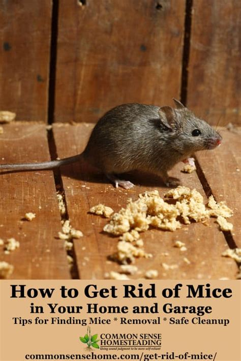 how to get rid of mice in house the best ways get rid of mice in your house and garage