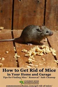 How to clean carpet after mice droppings floor matttroy for Mice in between floors