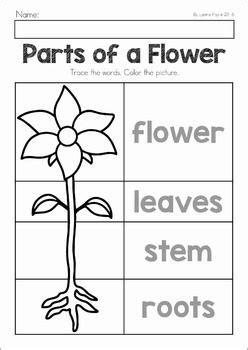 preschool worksheets amp activities preschool 731 | e68d0b053f0462fbfe8335248694e0fc