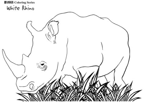 white rhino coloring page  printable coloring pages
