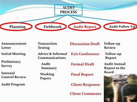 audit process audit procedures audit