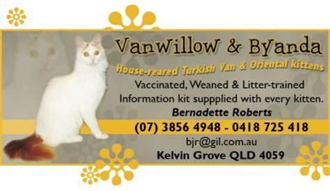 vanwillow byanda oriental shorthair breeders cat