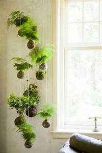 Hängende Pflanzen Für Draußen : die besten 17 ideen zu zimmerpflanze auf pinterest ~ Sanjose-hotels-ca.com Haus und Dekorationen